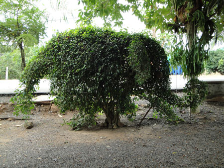 Mom's Elephant Tree